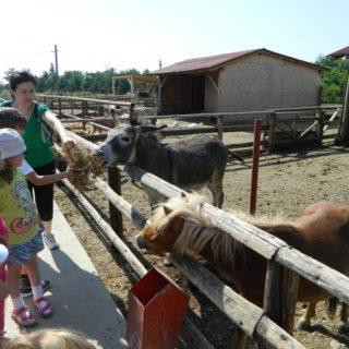 copii care hranesc animalele